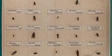 IES_CARDENALCISNEROS_Insectos_026