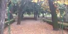 Jardin acacias