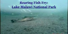 Rearing Fish Fry: Lake Malawi National Park: UNESCO Culture Sector