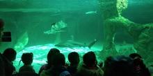 Visita al zoo 2019 31