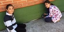 Quinto mide el Colegio 6