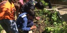 2019_06_11_4º observa insectos en el huerto_CEIP FDLR_Las Rozas 47