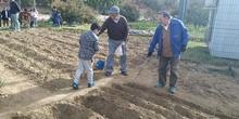 1º de Primaria_Plantamos garbanzo  10