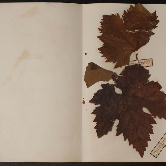 IES_SANISIDRO_MUSEO_Botanica_066