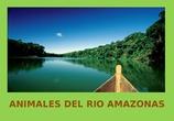 Animales del río Amazonas