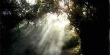 Sendero con nubes de azufre, Waimangu, Nueva Zelanda
