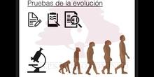 SECUNDARIA 4ºBIOLOGÍA Y GEOLOGÍAPRUEBAS DE LA EVOLUCIÓN