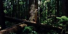 Bosque en la isla de Vancouver, Canadá