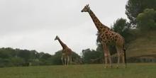 Los animales y su hábitat
