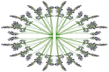 Simetría en abanico