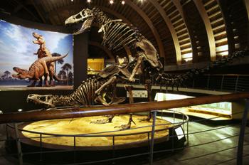 Vista de conjunto con gráfico de Tyrannosaurus rex (Dinosauria,