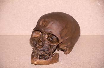 Homo sapiens sapiens (Mamíferos-Homínidos) Holoceno