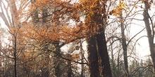 El Forestal en otoño