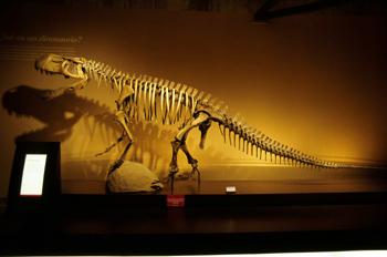 Protosuchus, Museo del Jurásico de Asturias, Colunga