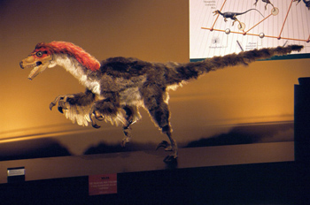 Plumaje de Dromaeosaurus (Dinosauria, Theropoda), Museo del Jurá