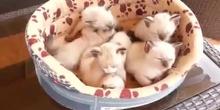 Videos gatos pequeños