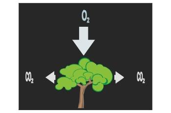 Respiración vegetal