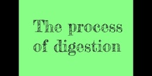 PRIMARIA - 3º - NATURAL SCIENCE - PROCESS OF DIGESTION