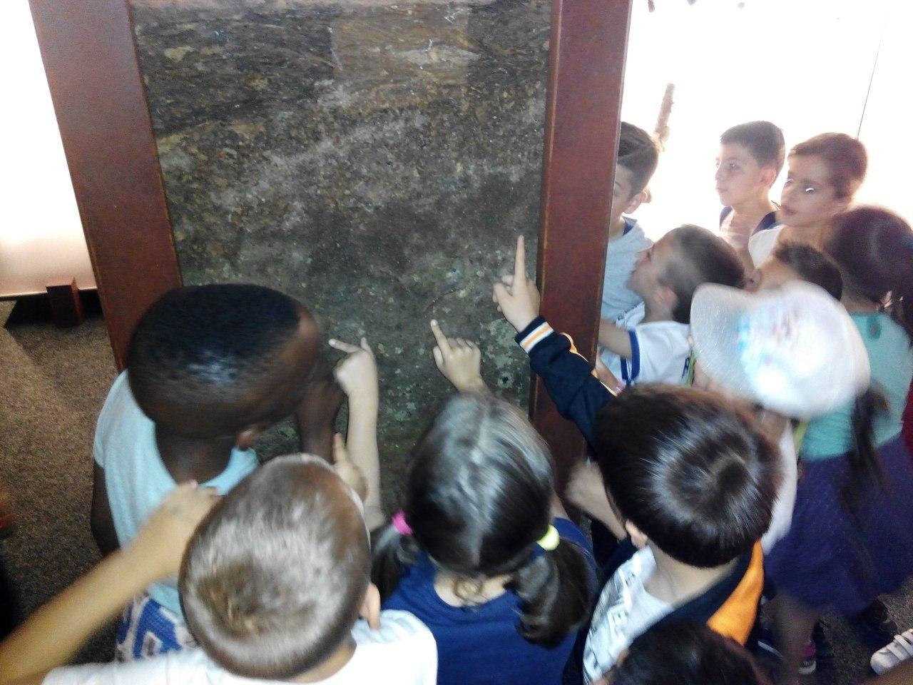 Visita a la exposición El Bosque. 1º 2º Primaria. CEIP Pinocho. 2016/17 16