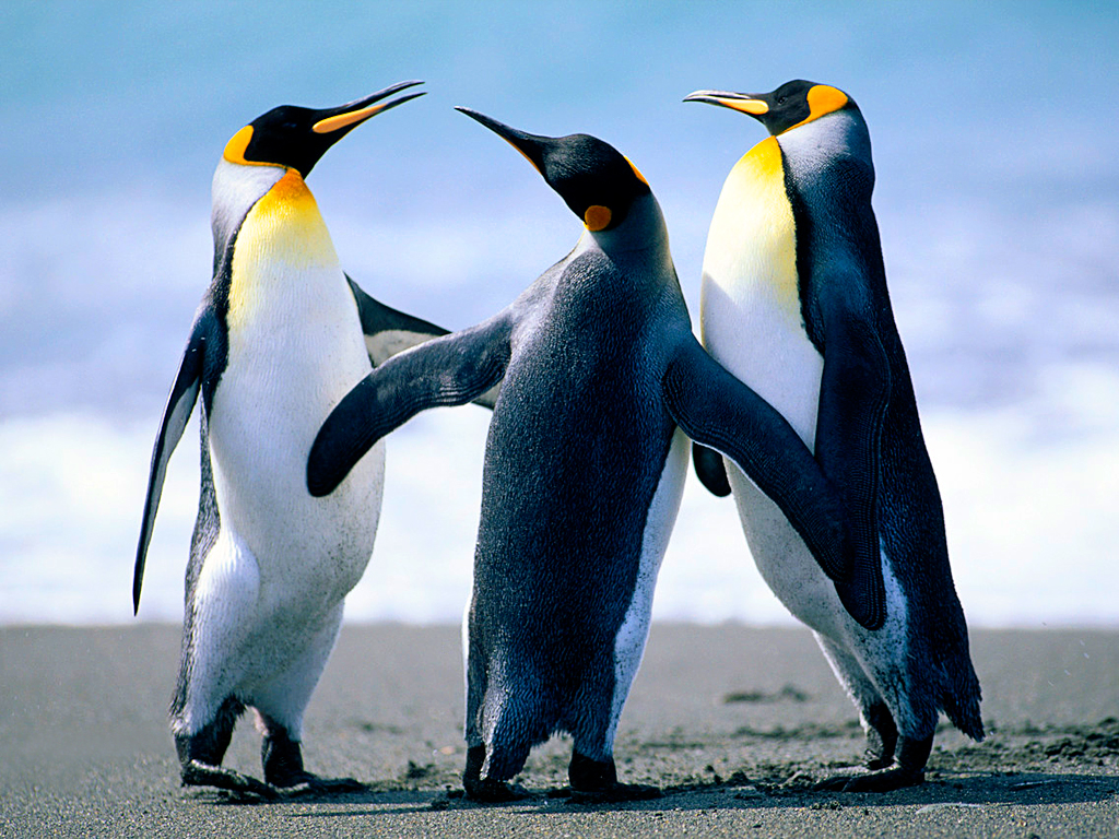 pingüinos bailando