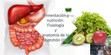 Tema 4 Alimentación y nutrición. Fisiología y anatomía del aparato digestivo (III))