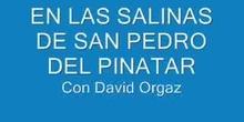 En las Salinas de San Pedro del Pinatar