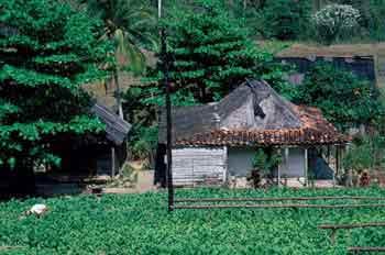 Construcción rural en Cuba
