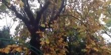 """Jardines del CRIF """"Las Acacias"""" (Modificado)"""