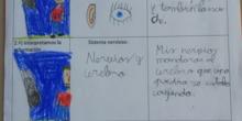 [Lapbook] - Mi atlas del cuerpo humano (3º de primaria) - IMAGEN 3