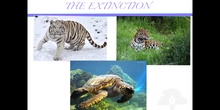 PRIMARIA 5º	CIENCIAS DE LA NATURALEZA	EXTINCTION AND PROTECTING SPECIES