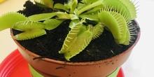 Planta carnívora 2