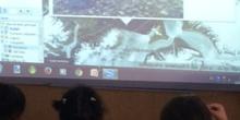 2017_02_Los delfines de Infantil 3A en el Polo Norte 16
