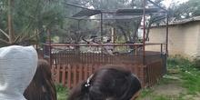 Salida 5º de Primaria al centro recuperación animal GREFA 10