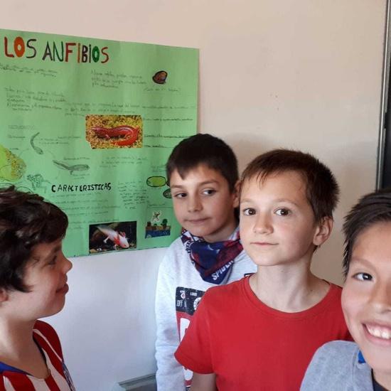 2020_02_13_4º proyecto animales vertebrados_CEIP FDLR_Las Rozas 7