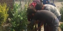 2019_05_Los alumnos de 4º en el Huerto_CEIP FDLR_Las Rozas 45