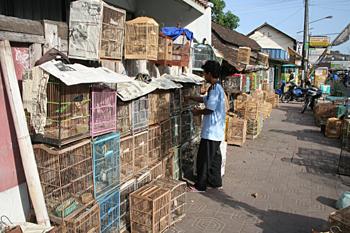 Mercado de pájaros, Jogyakarta, Indonesia