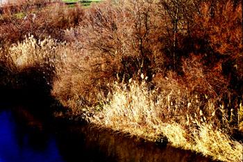 Ribera de río
