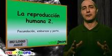 LA REPRODUCCIÓN HUMANA .2