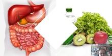 Tema 4 Alimentación y nutrición. Fisiología y anatomía del aparato digestivo (I)