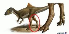 El Megalosaurio y Richard Owen