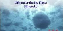 Life under the Ice Floes: The Shiretoko Peninsula in Hokkaido: UNESCO Culture Sector
