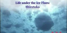 Life under the Ice Floes: The Shiretoko Peninsula in Hokkaido: UNESCO Culture Sector