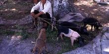 Vendedor de cerdos en Champotón, México