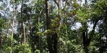 Selva en Queensland, Australia