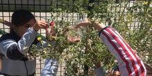 2019_06_11_4º observa insectos en el huerto_1_CEIP FDLR_Las Rozas 3