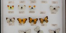 IES_CARDENALCISNEROS_Insectos_009
