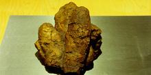 Huevos de dinosaurio carnívoro, Museo del Jurásico de Asturias,