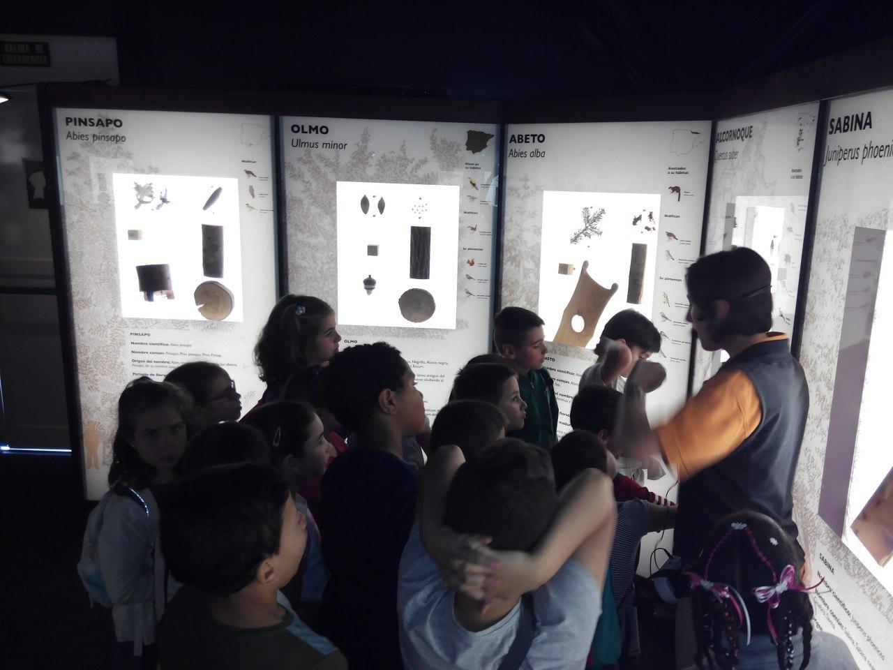 Visita a la exposición El Bosque. 1º 2º Primaria. CEIP Pinocho. 2016/17 6