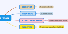 Mind map Nutrition