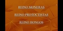 REINOS MONERAS, PROTOCTISTA Y FUNGI